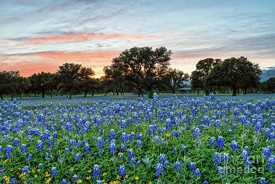 Sunset Photograph - Bluebonnet Sunset by Tod and Cynthia Grubbs