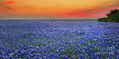 Fence Photograph - Bluebonnet Sunset Vista - Texas Landscape by Jon Holiday