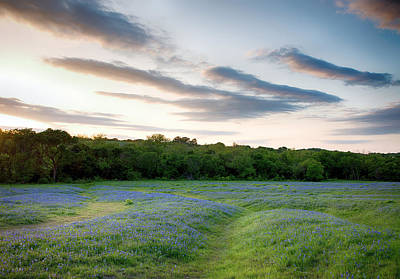 Photograph - Bluebonnet Trail Ennis Texas 2015 V5 by Rospotte Photography