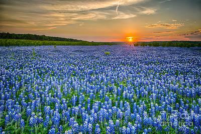 Spring Photograph - Bluebonnet Vista Texas Style   by Tod and Cynthia Grubbs
