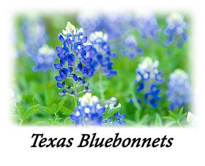 Photograph - Bluebonnet With Font T-shirt by Rospotte Photography