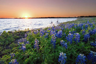Bluebonnets Along A Shore Before The Sunset - Texas Art Print by Ellie Teramoto