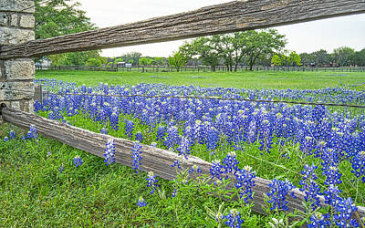 Wildflowers Photograph - Bluebonnets Along Fence by Tod and Cynthia Grubbs