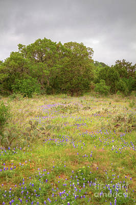Photograph - Bluebonnets And Cactus by David Cutts