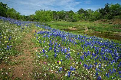 Photograph - Bluebonnets And Daisies On The Willow City Loop by Lynn Bauer