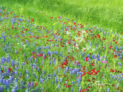 Photograph - Bluebonnets And Drummond's Phlox by Tim Fitzharris