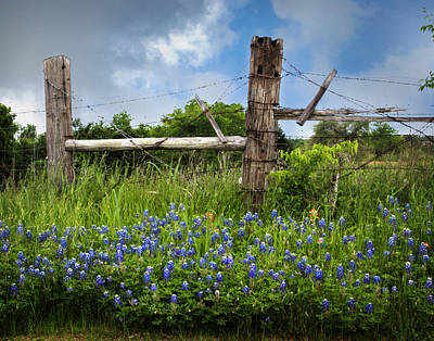 Photograph - Bluebonnets And Fence by David and Carol Kelly
