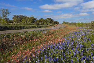 Texas Wildflowers Photograph - Bluebonnets And Paintbrush In The Hill Country 1 by Rob Greebon