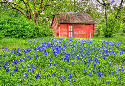 Photograph - Bluebonnets And Red House II by David and Carol Kelly