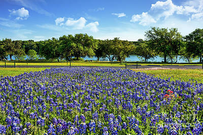 Bluebonnets And Wildflowers Along River  Art Print