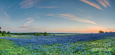 Wildflowers Photograph - Bluebonnets At Sunrise by Tod and Cynthia Grubbs