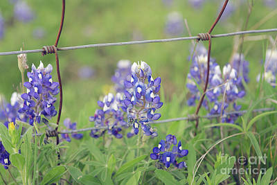 Photograph - Bluebonnets By The Fence by Cathy Alba