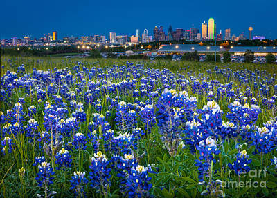 Bluebonnets In Dallas Art Print by Inge Johnsson