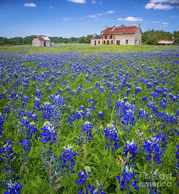 Photograph - Bluebonnets In Marble Falls by Inge Johnsson