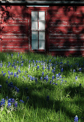 Art Print featuring the photograph Bluebonnets In The Shade by David and Carol Kelly