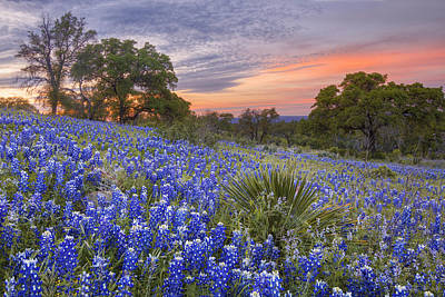 Wildflowers In Texas Photograph - Bluebonnets Under A Texas Sunset 1 by Rob Greebon