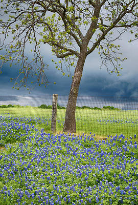 Photograph - Bluebonnet Rain by Rospotte Photography