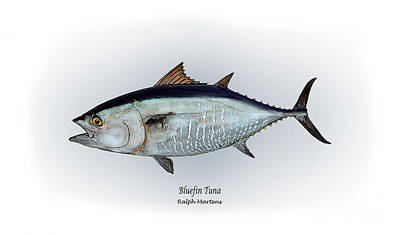 Angling Painting - Bluefin Tuna by Ralph Martens