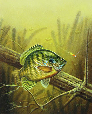 Angling Painting - Bluegill And Jig by JQ Licensing