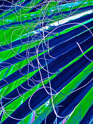 Bluegreen Palm Fun Art Print by Gwyn Newcombe