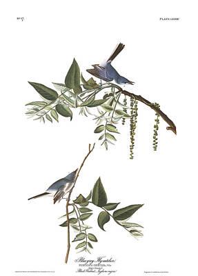 Flycatcher Wall Art - Painting - Bluegrey Flycatcher by John James Audubon