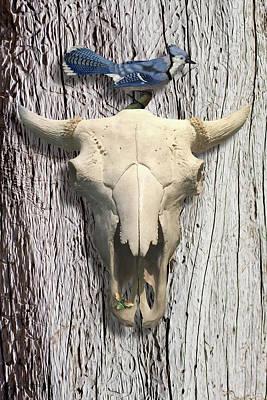 Digital Art - Bluejay And The Buffalo Skull by Gary Grayson