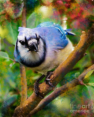 Bluejay Digital Art - Bluejay by Betty LaRue