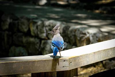 Yosemite National Park Mixed Media - Bluejay by Daniel Barajas