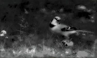Photograph - Bluejay-fall Approaching-black And White by Mike Breau