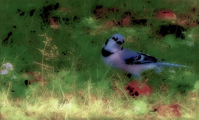 Photograph - Bluejay-fall Approaching-desaturated  by Mike Breau