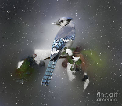 Digital Art - Bluejay In Winter by Lena Auxier