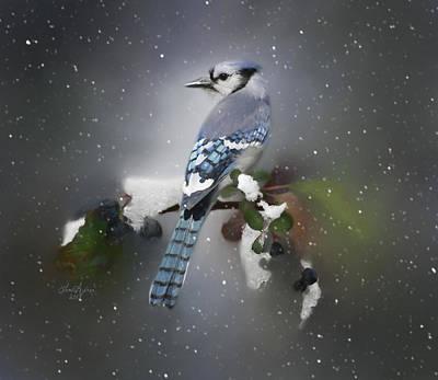 Bluejay In Winter Original