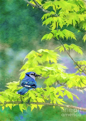 Photograph - Bluejay by Larry McMahon
