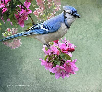 Bluejay Digital Art - Bluejay On Spring Blossoms by R christopher Vest