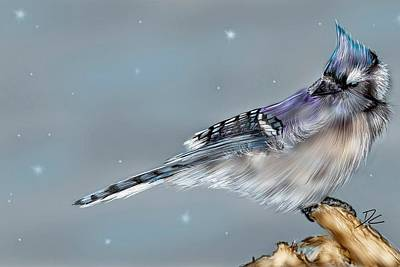 Digital Art - Winter Bluejay by Darren Cannell