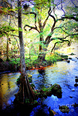 Florida Swamp Photograph - Blues In Florida Swamp by Carol Groenen