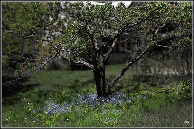 Photograph - Bluet Ring by Wayne King