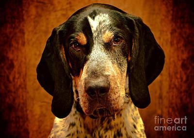 Digital Art - Bluetick Coonhound by Bark
