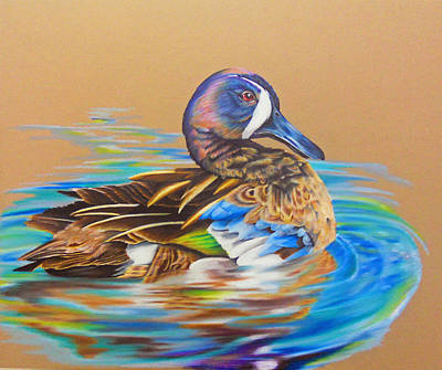 Duck Water Pencil Drawing - Bluewinged Teal by Virginia Simmons