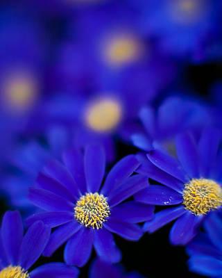 Gerbera Photograph - Bluey Gerbera by Mike Reid