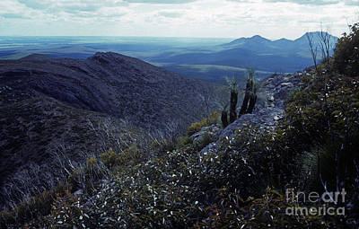 Photograph - Bluff Knoll From Talyuberlup - Western Australia by Phil Banks