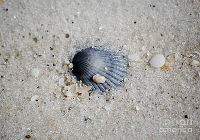 Bluish Purple Ribbed Sea Shell Macro Buried In Fine Wet Sand Print by Shawn O'Brien