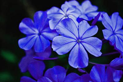 Photograph - Blue Beauty by Bob Johnson