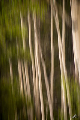 Photograph - Blurred Birch by Phil Rispin