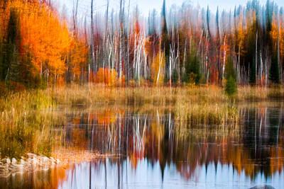 Photograph - Blurred Golden Autumn Palette Of Birch by Jeff Folger