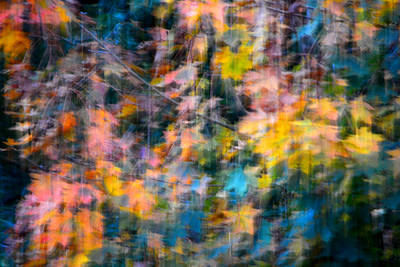 Photograph - Blurred Leaf Abstract 2 by Theresa Pausch