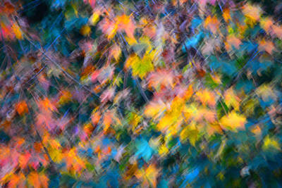 Photograph - Blurred Leaf Abstract 3 by Theresa Pausch