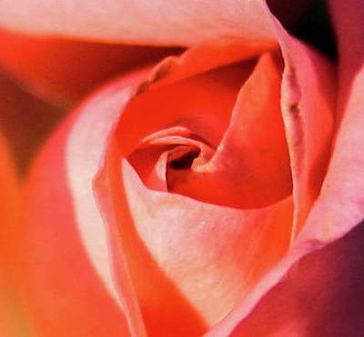 Photograph - Blurred Rose by Jeff Kurtz