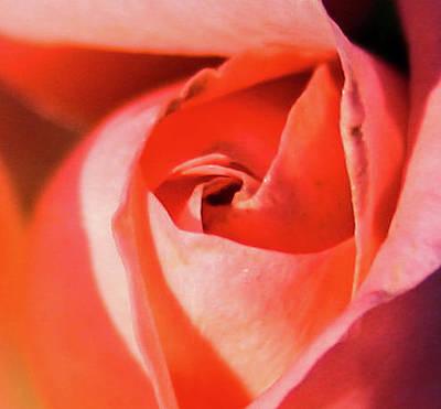 Photograph - Blurred Rose by Jeff Kurtz