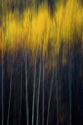 Photograph - Blurry Aspens 2 by Whit Richardson
